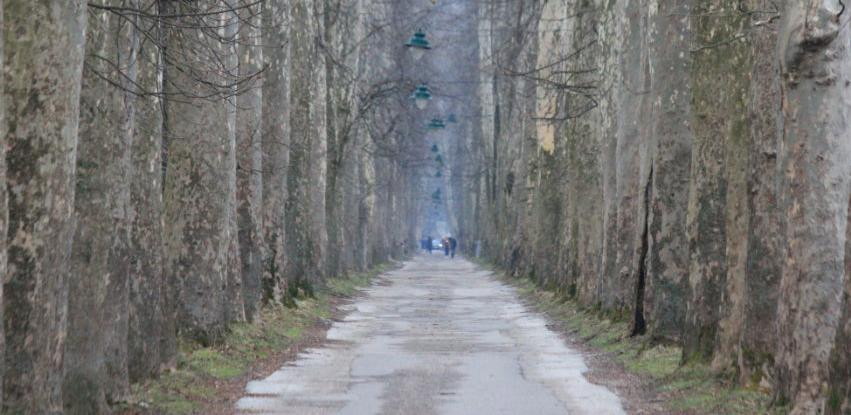 """Direkcija za puteve i preduzeće """"Rad"""" kreću sa obnovom Velike aleje"""