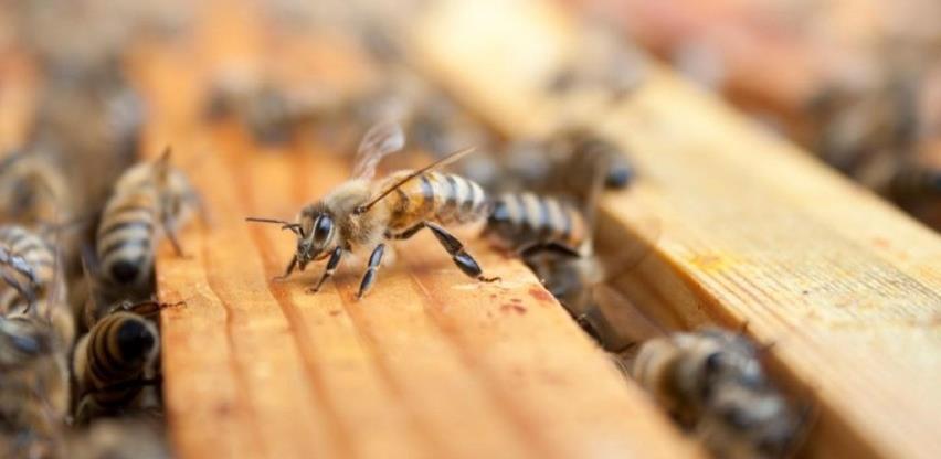 INZ savjetuje - sve što trebaju znati pčelari i korisnici proizvoda od pčela