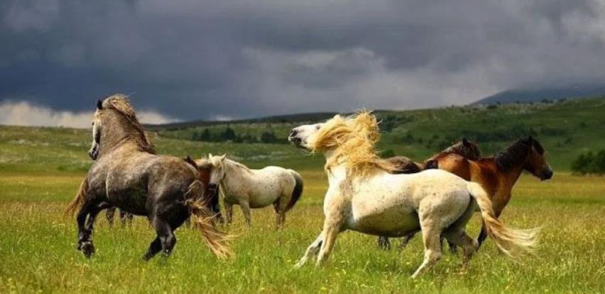 Galop divljih konja, čarobna Šujica i izvor Duman - Livno snimljeno iz zraka