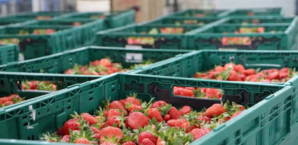 Hercegovačka polja proizvode za domaće i strano tržište