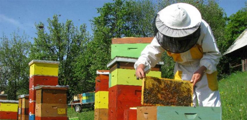 USK za pčelare izdvaja 120.000 KM, oni se žale na nedovoljnu podršku