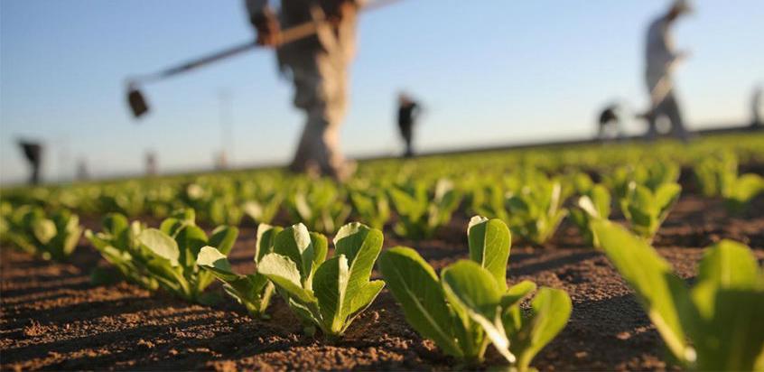 Vlada TK za podršku poljoprivrednoj proizvodnji izdvojila 3,8 miliona KM