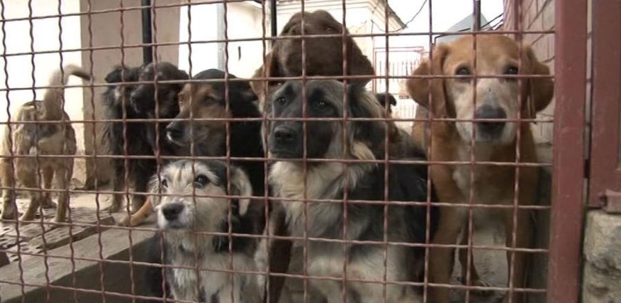 Azil za pse koštat će tri miliona maraka