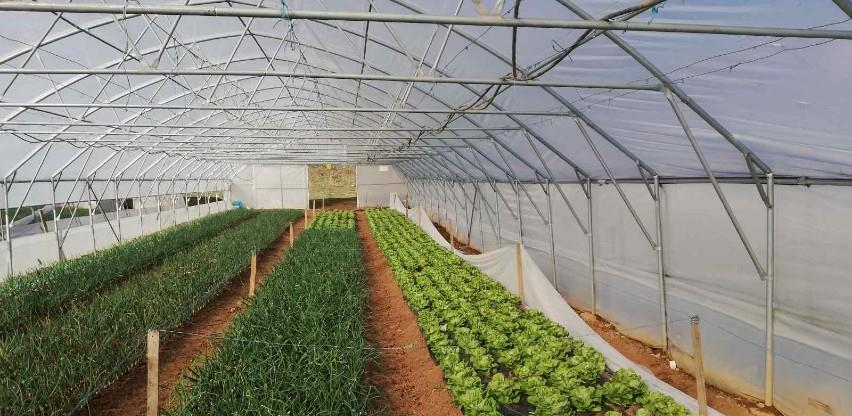 Općina Novi Grad dodjeljuje na besplatno korištenje zemljište za sjetvu