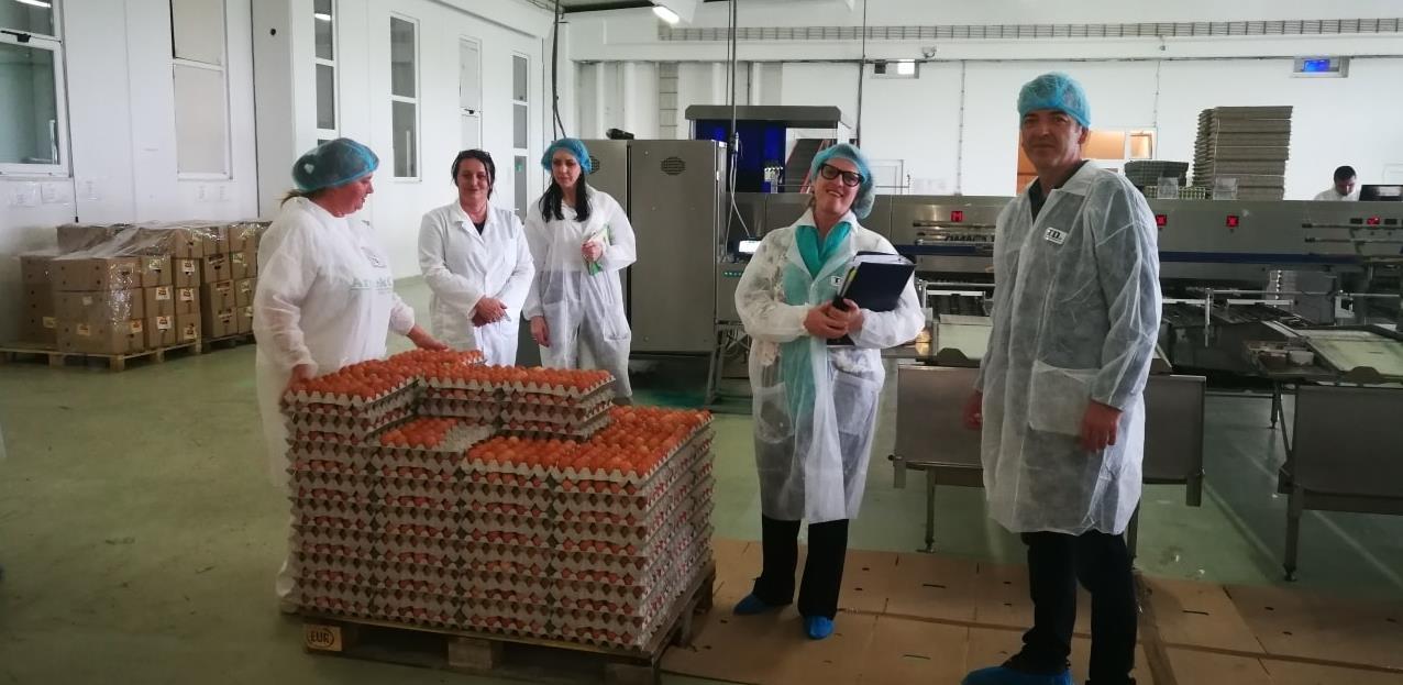 U Donjem Žabaru niče pet farmi za proizvodnju konzumnih jaja