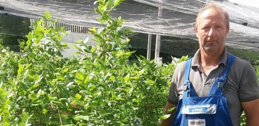 Rekordan prinos borovnice na bihaćkoj plantaži Sušić