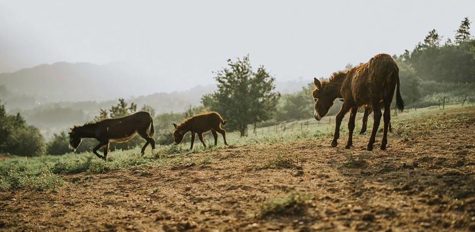 """Inovacija """"Malog farmera"""": Domaće magareće peletirano đubrivo uskoro na tržištu"""