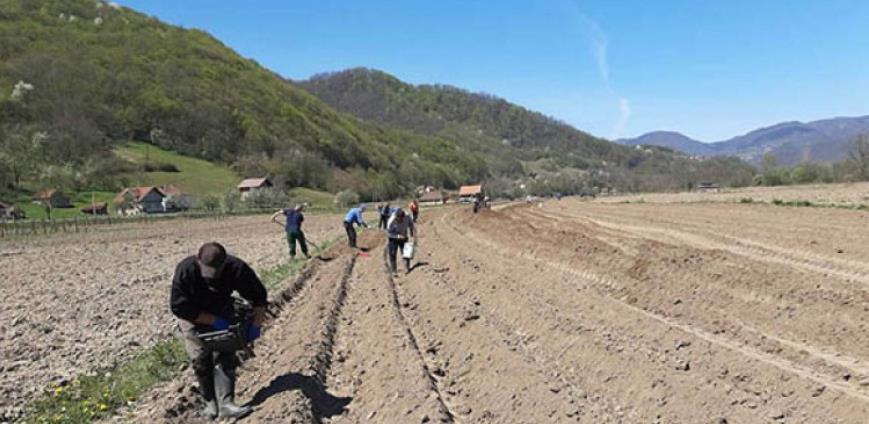 Zajimović: Direkcija završava sjetvu na 116 hektara vakufskog zemljišta u BiH