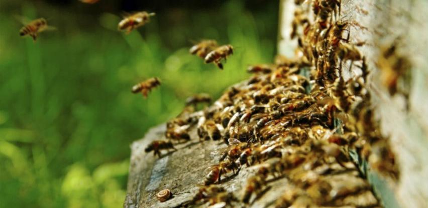 "Održan okrugli stol na temu ""Pčelo put mi kaži – Pravilnik o pčelarstvu"""