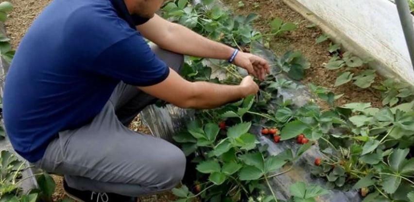 Mladi do prvog radnog iskustva dolaze u poljoprivrednom sektoru