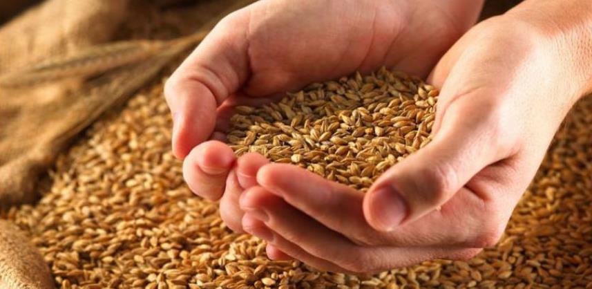 Manje pšenice neće podići cijene hljeba i brašna