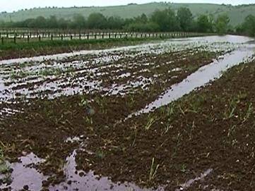 Iako su pretrpjeli ogromne štete, poljoprivrednici se nadaju boljem