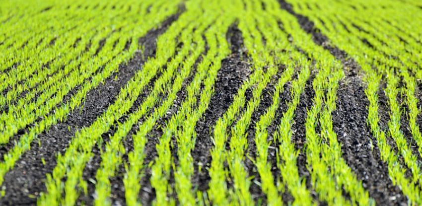 Unaprijediti model finansiranja otkupa domaćih poljoprivrednih proizvoda