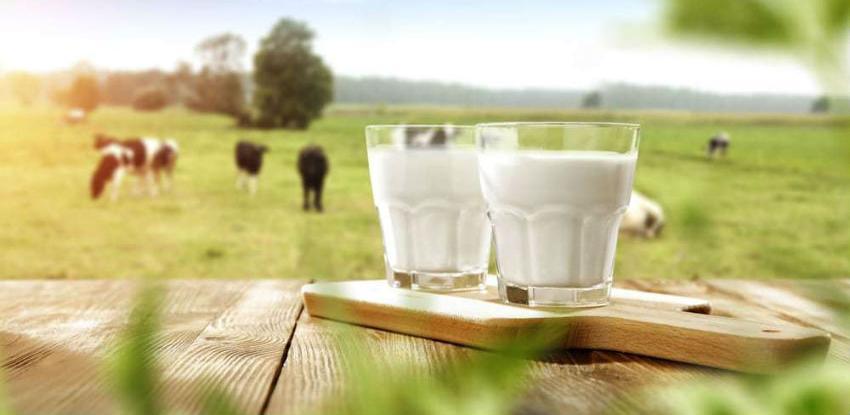 Usorac: Održati podsticaje i povećati cijenu mlijeka