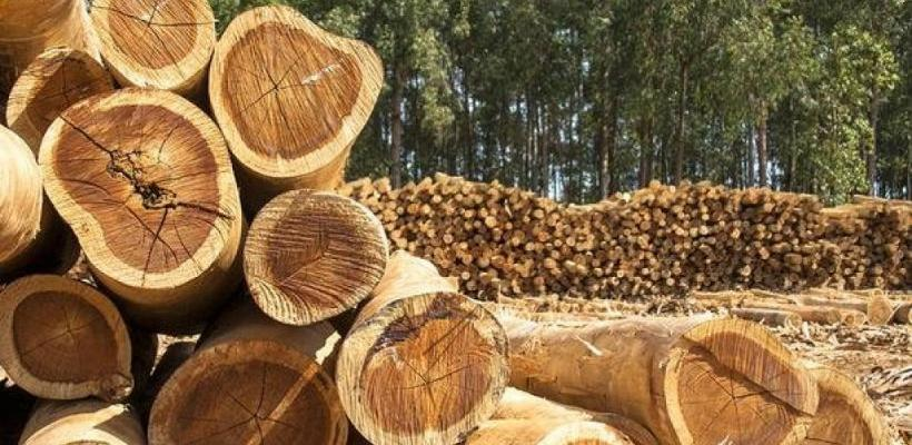 Prihod od naknada za korištenje šuma 450.000 KM