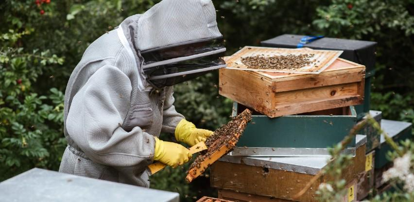 Pandemija pospješila prodaju meda, trebinjski pčelari rasprodali sve zalihe