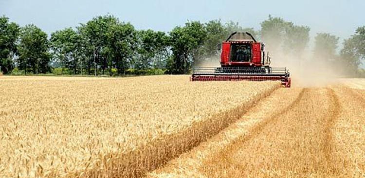 U 2021. povećana proizvodnja pšenice u FBiH
