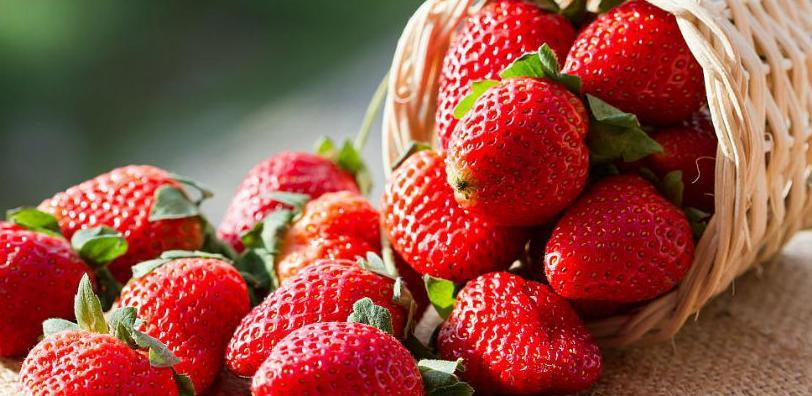 Britanska kompanija Hampton zainteresovana za uzgoj jagode u Kalesiji