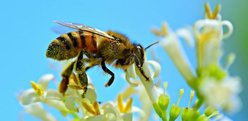 Praktično uputstvo za zaštitu pčela u procesima korištenja zaštite malina