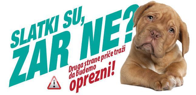 INZ do 15. decembra omogućava vlasnicima pasa besplatni koprološki pregled