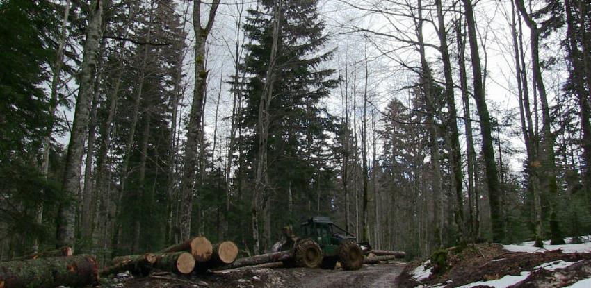 USK šume uvele inovativni program: Telefonom prate sječu drveća