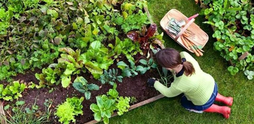Koliko zemljišta i posla je potrebno da porodica proizvodi hranu za sebe?