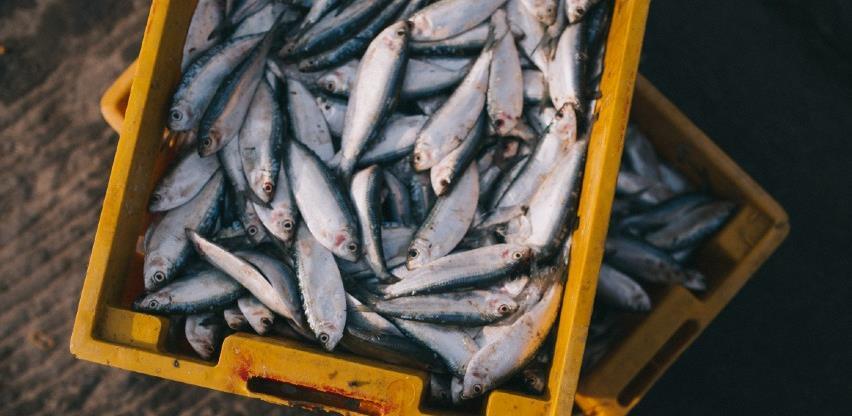 Britanija dogovorila kvote za izlov ribe s EU-om i Norveškom