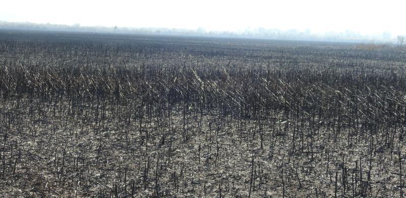 Požar u Hutovom blatu pričinio ogromnu štetu, uništena skoro sva vegetacija