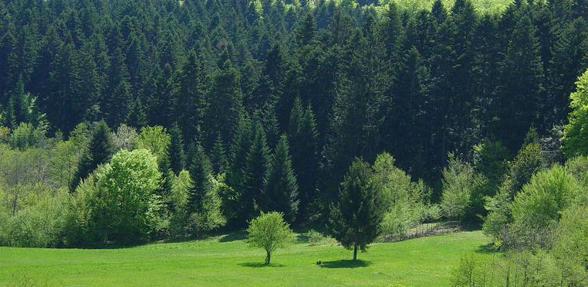 Selma Bašagić: Stanje u šumama je nezadovoljavajuće