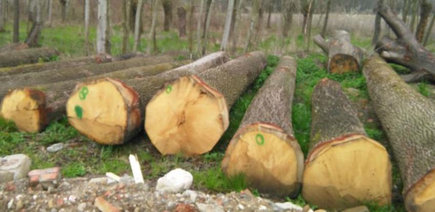 U FBiH značajan porast proizvodnje i prodaje šumskih sortimenata