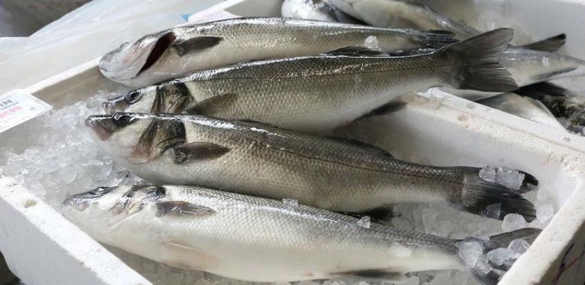 U BiH proizvedeno 3.700 tona ribe, kapacitet 13.000 tona