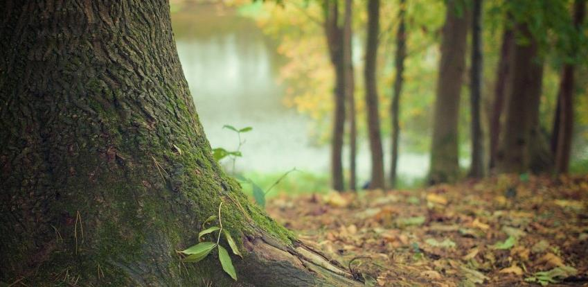 Predstavljena aplikacija za prijavu ilegalnih aktivnosti u šumarstvu u KS i ZDK