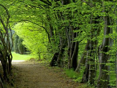 FBiH dobiva četvrto poduzeće sa certifikatom za održivo upravljanje šumama