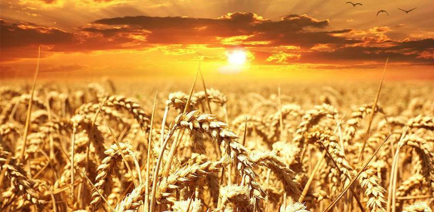 Za poljoprivrednu proizvodnju u RS-u isplaćeno gotovo 5 miliona KM