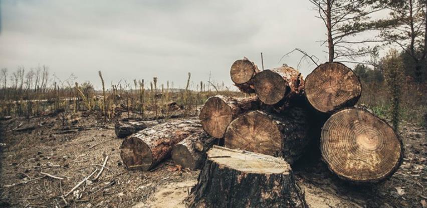 Šumari osumnjičeni da su oštetili preduzeće za 87.500 KM