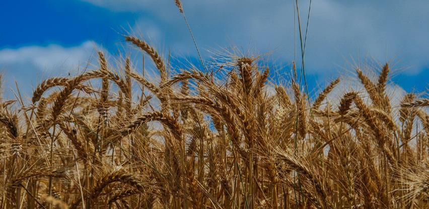 Gubici uroda u Europi u zadnjih 50 godina tri puta veći zbog suša