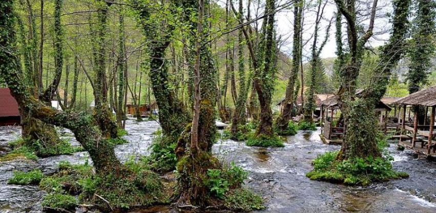 Prašuma Јanj uvrštena na UNESCO listu svjetske baštine