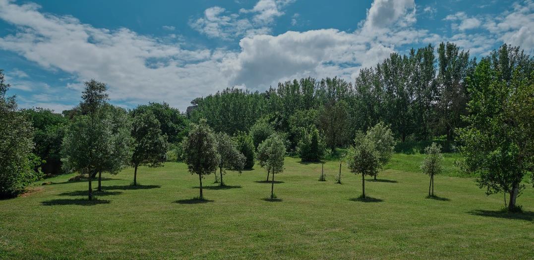 UniCredit i online platforma Treedom stvaraju UniCredit šumu od 90.000 stabala
