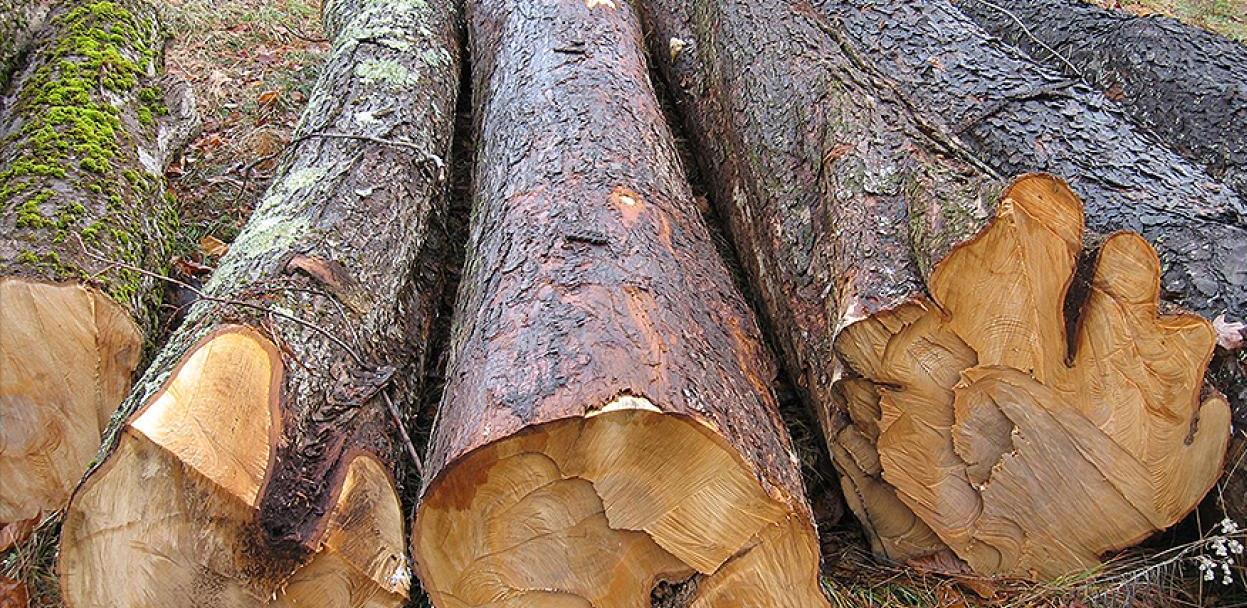 Federacija ukinula obavezu kontrole kvalitete drvnih sortimenata pri izvozu