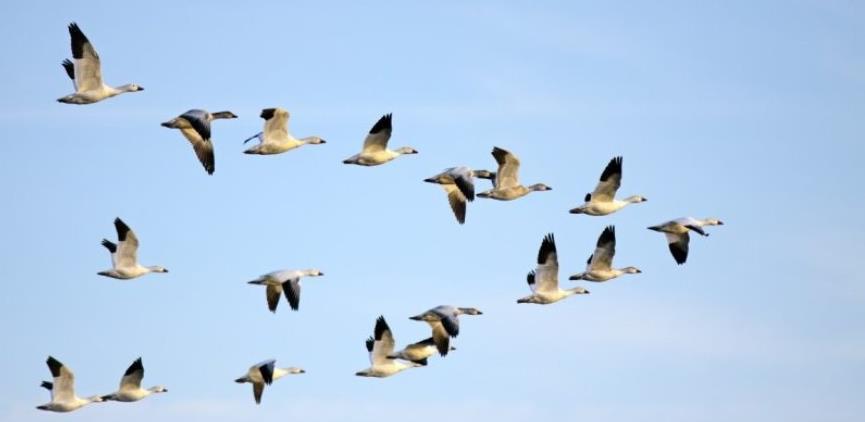 Bosna i Hercegovina ima obavezu zaštiti ptice
