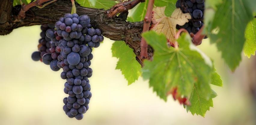 Vino iz Sanskog Mosta našlo put i do Austrije