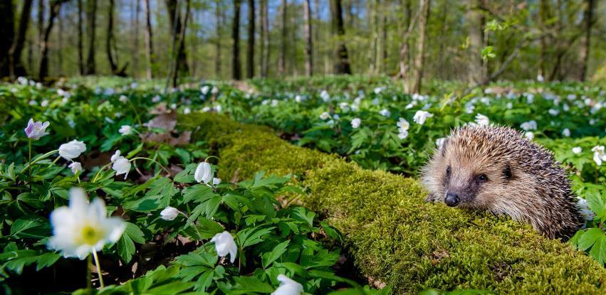 WWF poziva svjetske čelnike da preokrenu gubitak prirode do 2030. godine