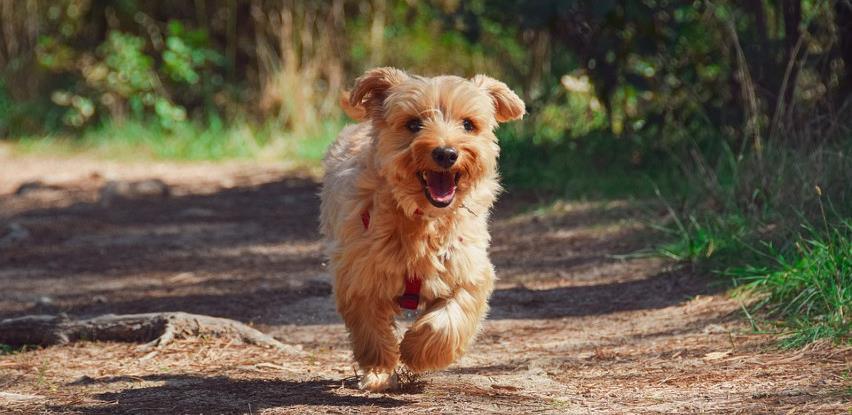 Novo pravilo o šetanju pasa zbunilo Nijemce