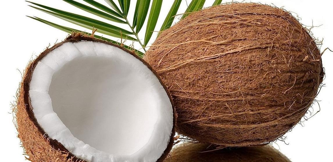 Majmuni beru 1.000 kokosa na dan, čovjek samo 80