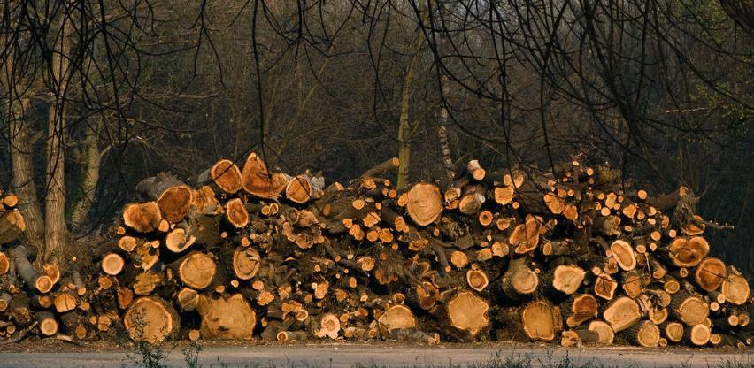 VTKBiH podržava donošenje mjera za smanjenja izvoza šumskih sortimenata
