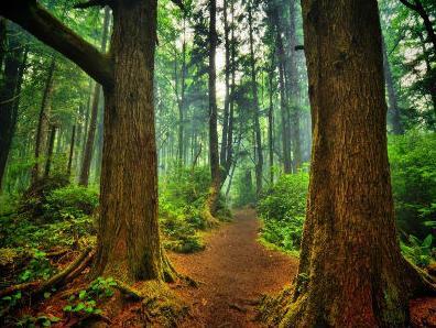 Započeo projekt certificiranja šuma