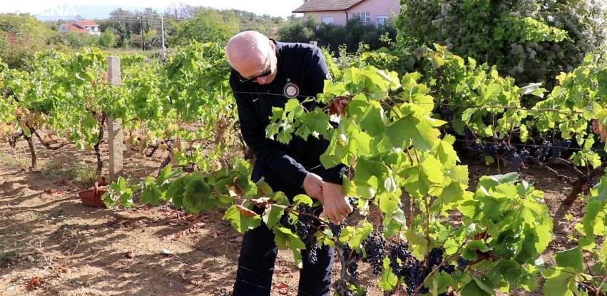 Hercegovačka vina cijenjena na svjetskom tržištu