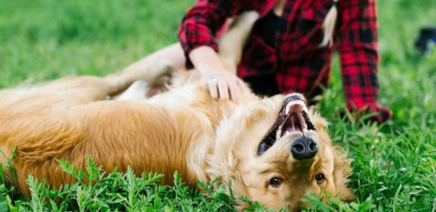Psi ipak ne vole kad ih se češka po trbuhu