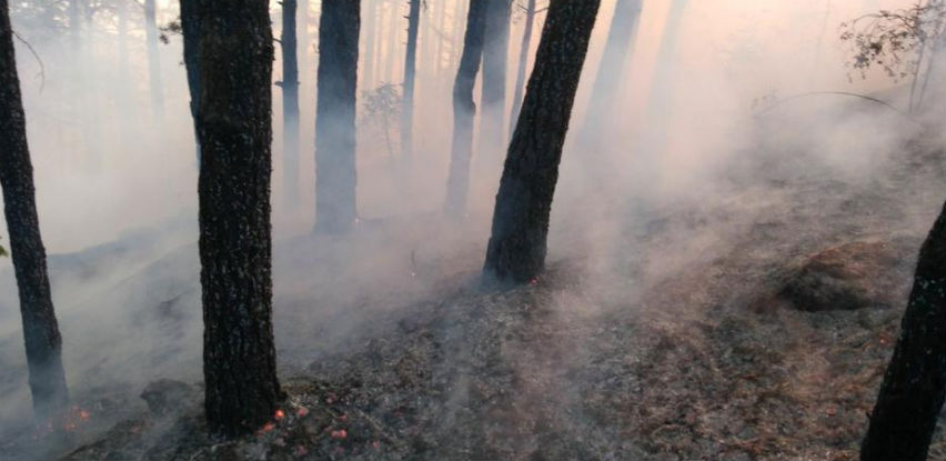 Štete od požara u šumama HBŽ-a procijenjene na šest milijuna KM