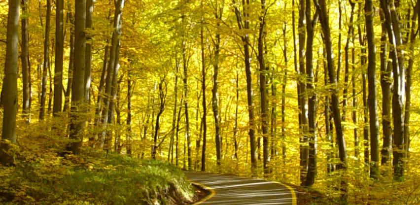 Proizvodnja šumskih sortimenata u posljednjem kvartalu smanjena za 10 posto
